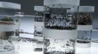 Ants – Nature's Secret Power (2006)