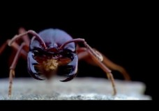 A Biography of Edward O. Wilson – Lord of the Ants (2008)