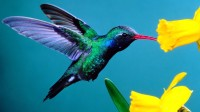 Hummingbirds: Magic in the Air – PBS (2010)