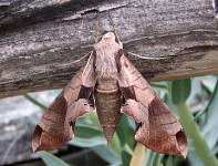 Parkta Duran Kelebekler