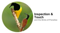 An Illustrated Introduction to Natural Selection & Sexual Selection – Cornell Lab of Ornithology (2013)