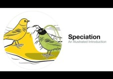 An Illustrated Introduction to Speciation – Cornell Lab of Ornithology (2013)