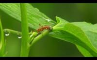 Ants Defending Plants