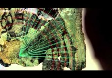 The Antikythera Mechanism: The Two-Thousand-Year-Old Computer – Mike Beckham (2012)