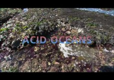 Acid Oceans – Science Bulletins – AMNH