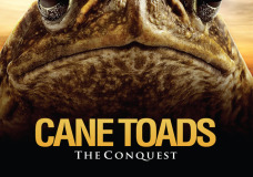 Cane Toads: The Conquest – Mark Lewis (2010)