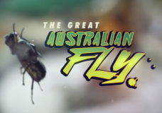 The Great Australian Fly – Tosca Looby (2014)