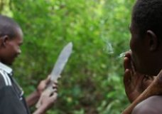 If a Tree Falls: The Mozambican Forest at Risk – Mike & Sam Goldwater (2010)
