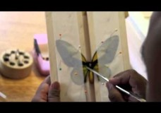 How to Pin a Butterfly – Anshul Fernando (2010)