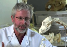The Origin of Tetrapods – Rob Whittlesey – HHMI BioInteractive (2014)