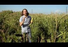 Popped Secret: The Mysterious Origin of Corn – Nathan Dappen & Neil Losin – HHMI (2015)