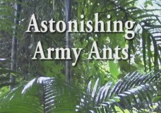 Astonishing Army Ants – Carl Rettenmeyer (2009)
