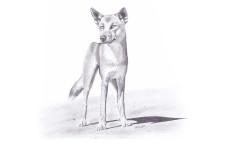 Dingo of the Australia – Adam Geiger (2013)