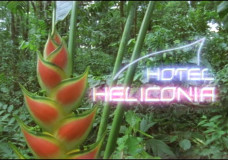 Hotel Heliconia – Phil Savoie (2001)