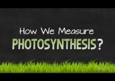 How We Measure Photosynthesis – NEON Education (2014)